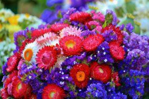 bukiet-kwiatow